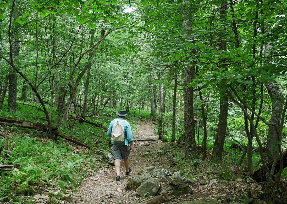 Appalachian Trail in Shenandoah
